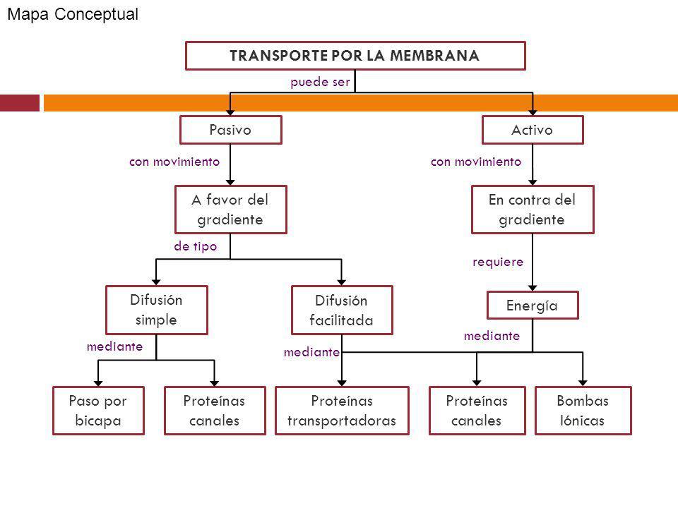 TRANSPORTE POR LA MEMBRANA PasivoActivo Difusión simple Difusión facilitada Proteínas canales Proteínas transportadoras Proteínas canales Bombas Iónic