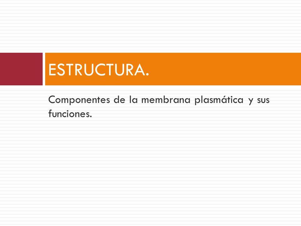 Componentes de la membrana plasmática y sus funciones. ESTRUCTURA.
