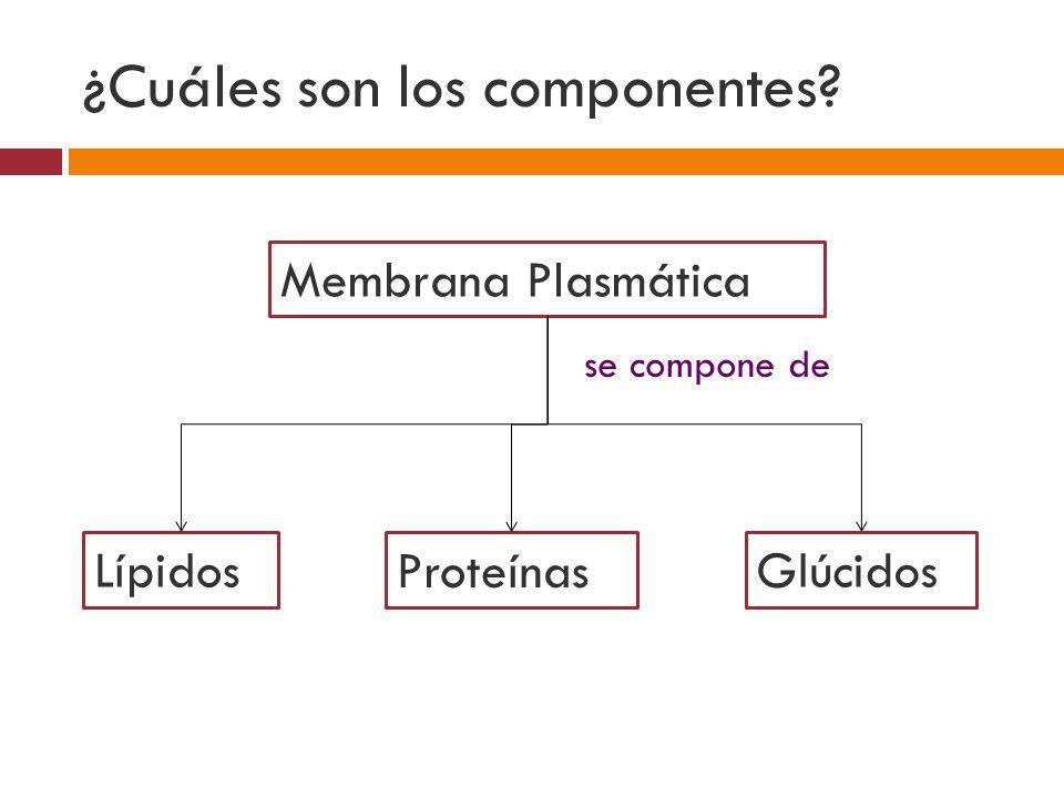 ¿Cuáles son los componentes? Membrana Plasmática Lípidos Proteínas Glúcidos se compone de
