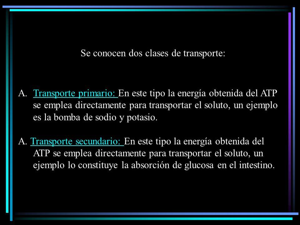 TRANSPORTE ACTIVO Corresponde a un transporte en el cual los solutos se movilizan en contra de un gradiente de concentración, es decir, de un lugar de