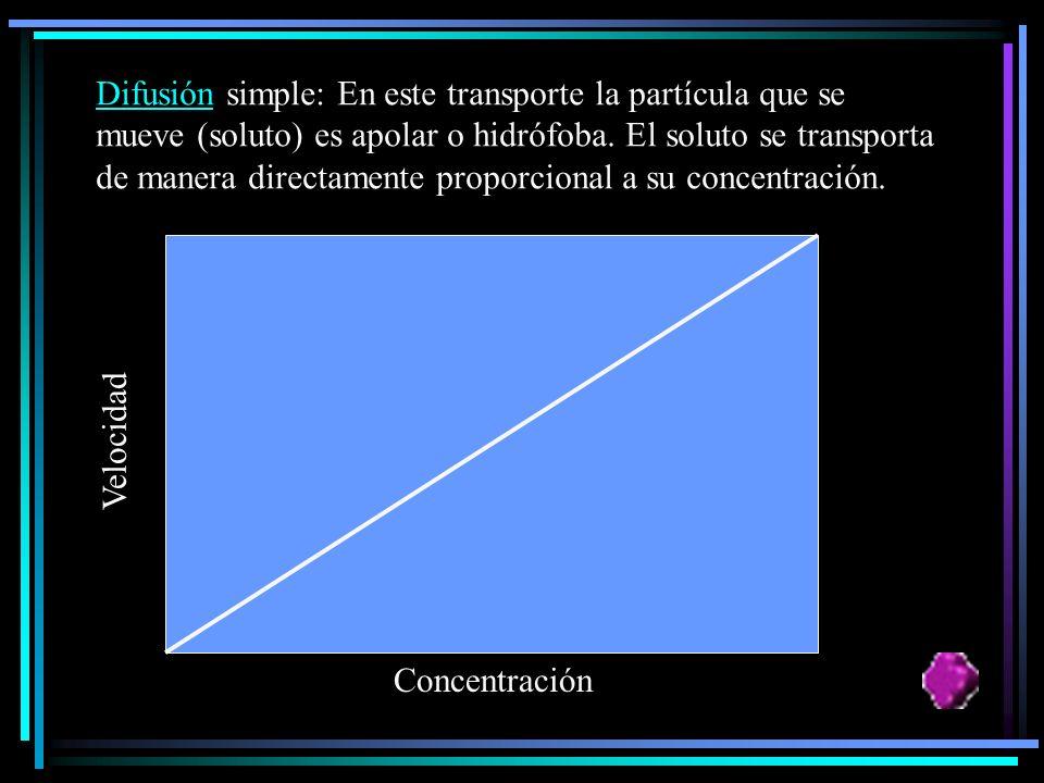 EL TRANSPORTE PASIVO Es aquel en el cual no se gasta energía. La sustancia se mueve de una zona de mayor concentración hacia otra donde se encuentra e
