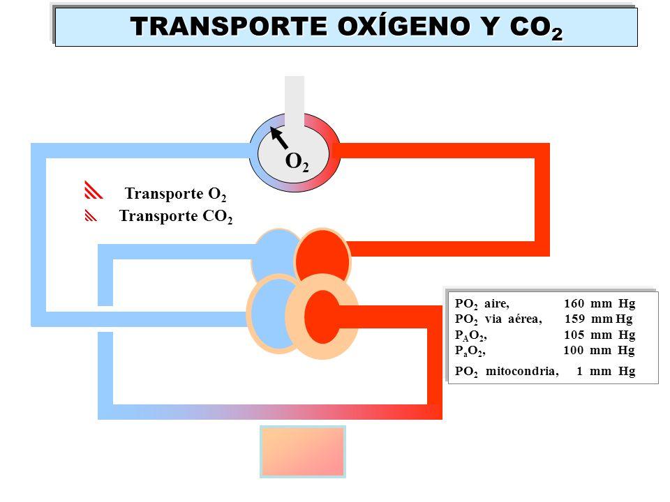 Transporte O 2 Transporte CO 2 PO 2 aire, 160 mm Hg PO 2 via aérea, 159 mm Hg P A O 2, 105 mm Hg P a O 2, 100 mm Hg PO 2 mitocondria, 1 mm Hg O2O2 TRA