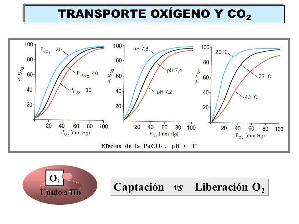 Unido a Hb O2O2 Efectos de la PaCO 2, pH y T o Captación vs Liberación O 2 TRANSPORTE OXÍGENO Y CO 2