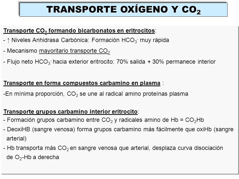 TRANSPORTE OXÍGENO Y CO 2 Transporte CO 2 formando bicarbonatos en eritrocitos: - Niveles Anhidrasa Carbónica: Formación HCO 3 - muy rápida - Mecanism