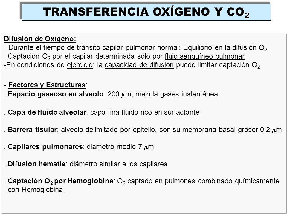 Difusión de Oxígeno: - Durante el tiempo de tránsito capilar pulmonar normal: Equilibrio en la difusión O 2 Captación O 2 por el capilar determinada s