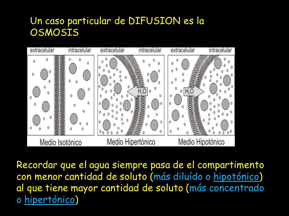 Un caso particular de DIFUSION es la OSMOSIS Recordar que el agua siempre pasa de el compartimento con menor cantidad de soluto (más diluído o hipotón