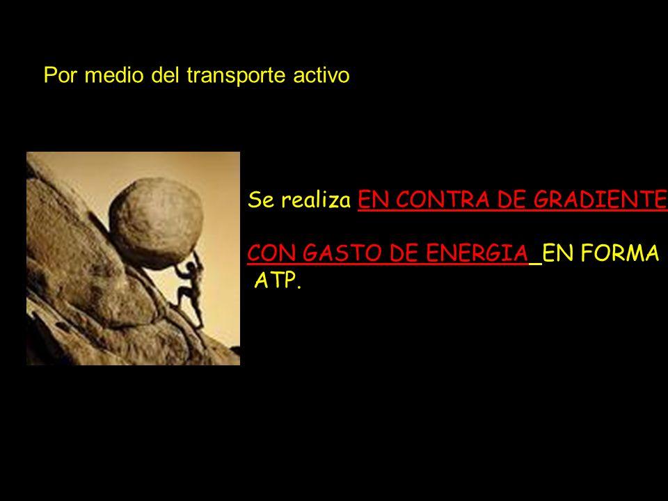 Por medio del transporte activo Se realiza EN CONTRA DE GRADIENTE CON GASTO DE ENERGIA EN FORMA ATP.