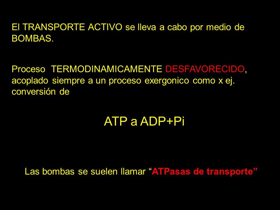 El TRANSPORTE ACTIVO se lleva a cabo por medio de BOMBAS. Proceso TERMODINAMICAMENTE DESFAVORECIDO, acoplado siempre a un proceso exergonico como x ej