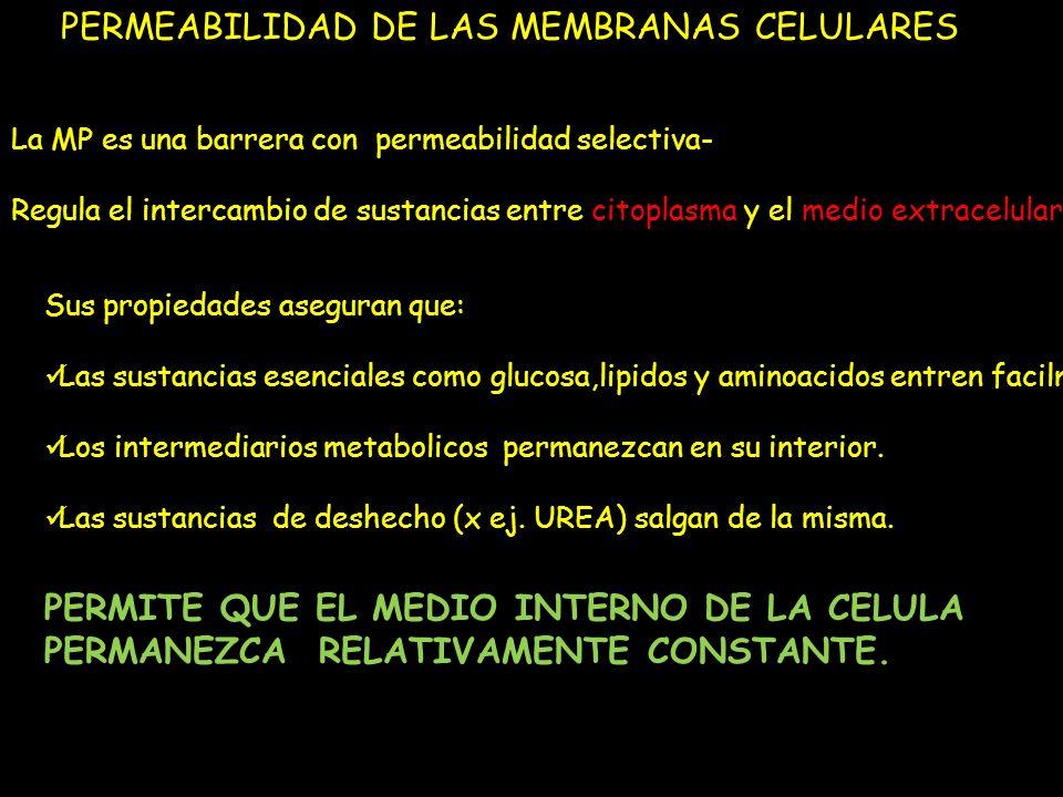 PERMEABILIDAD DE LAS MEMBRANAS CELULARES La MP es una barrera con permeabilidad selectiva- Regula el intercambio de sustancias entre citoplasma y el m