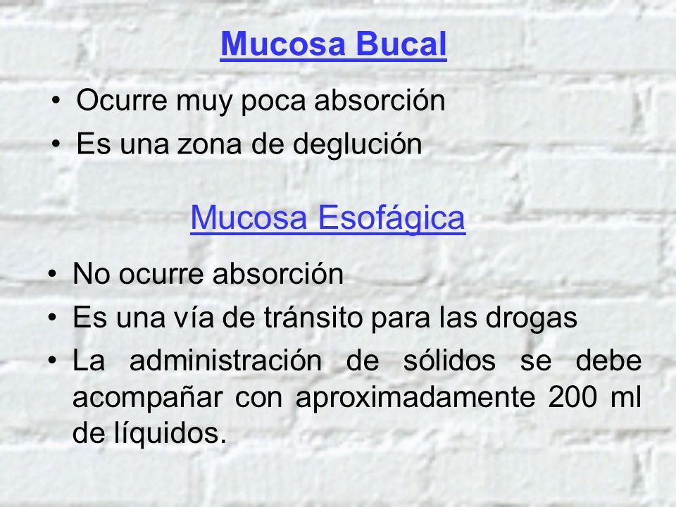 Mucosa Bucal Ocurre muy poca absorción Es una zona de deglución Mucosa Esofágica No ocurre absorción Es una vía de tránsito para las drogas La adminis