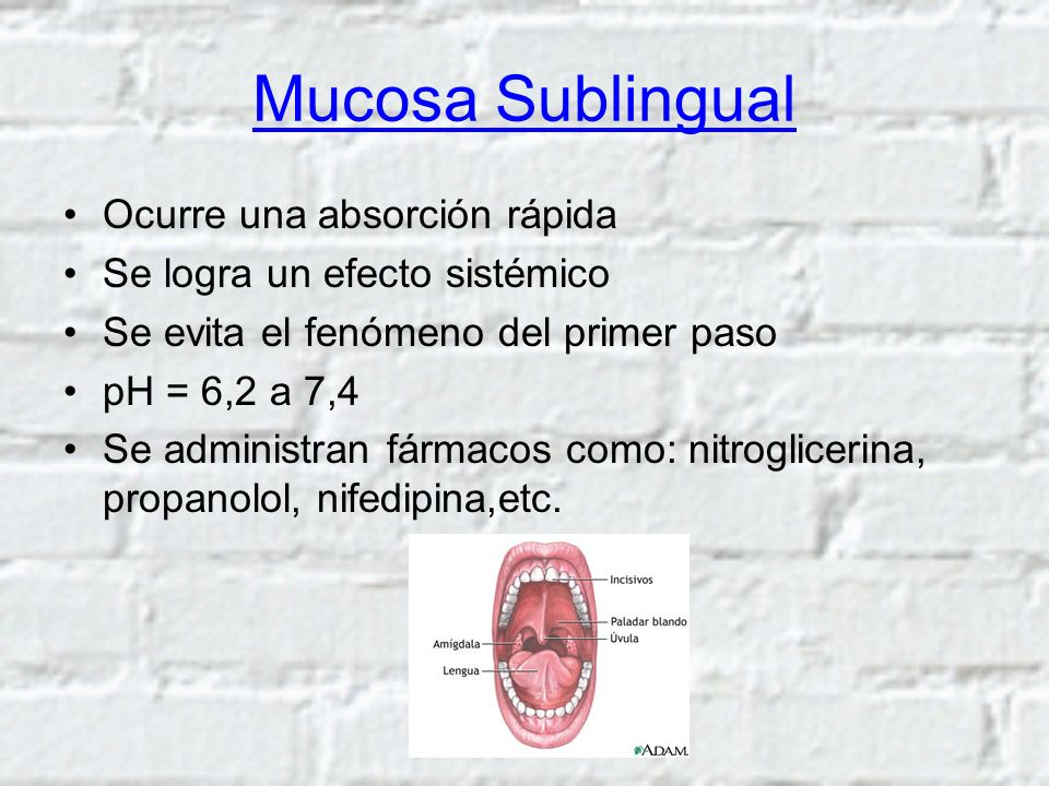 Mucosa Sublingual Ocurre una absorción rápida Se logra un efecto sistémico Se evita el fenómeno del primer paso pH = 6,2 a 7,4 Se administran fármacos