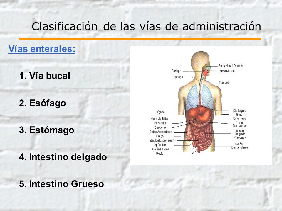 Vías enterales: 1. Vía bucal 2. Esófago 3. Estómago 4. Intestino delgado 5. Intestino Grueso Clasificación de las vías de administración