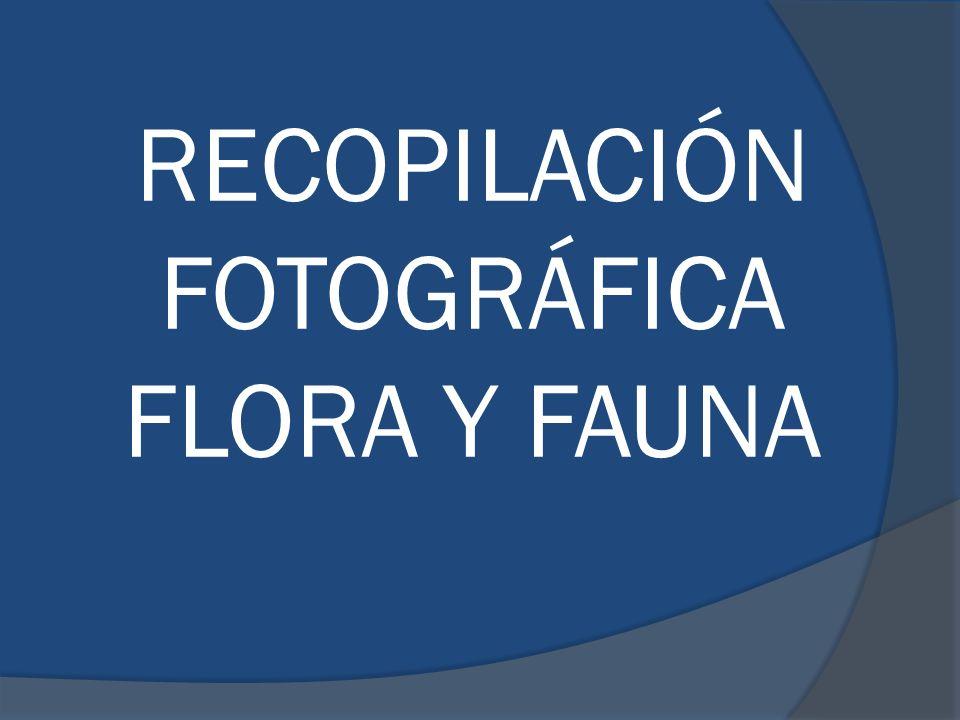RECOPILACIÓN FOTOGRÁFICA FLORA Y FAUNA