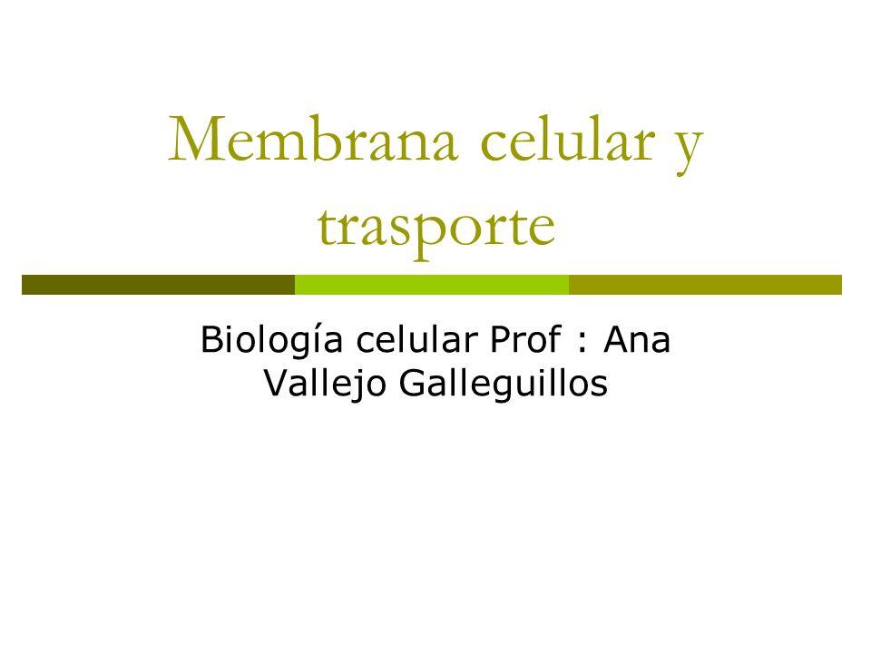 Membrana celular y trasporte Biología celular Prof : Ana Vallejo Galleguillos