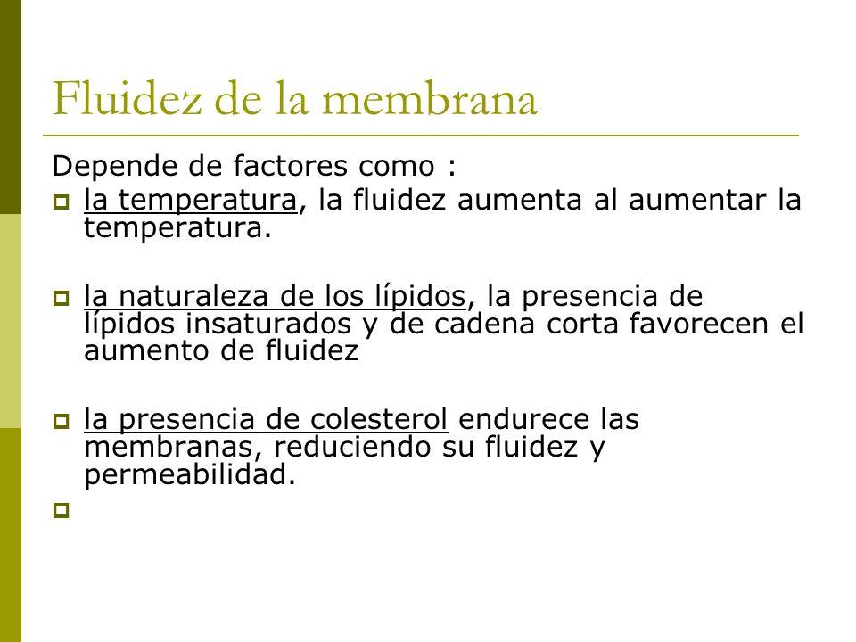 Fluidez de la membrana Depende de factores como : la temperatura, la fluidez aumenta al aumentar la temperatura. la naturaleza de los lípidos, la pres