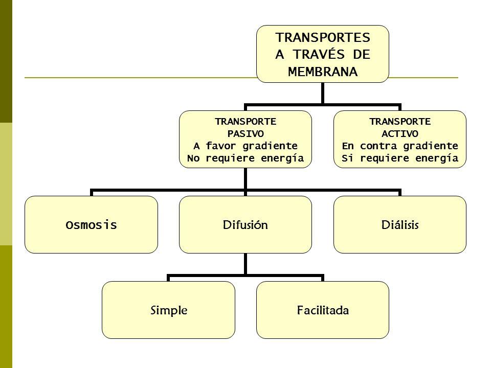 TRANSPORTES A TRAVÉS DE MEMBRANA TRANSPORTE PASIVO A favor gradiente No requiere energía Osmosis Difusión SimpleFacilitada Diálisis TRANSPORTE ACTIVO