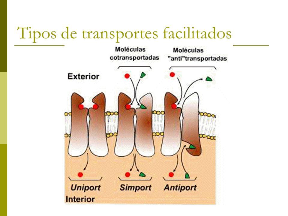 Tipos de transportes facilitados