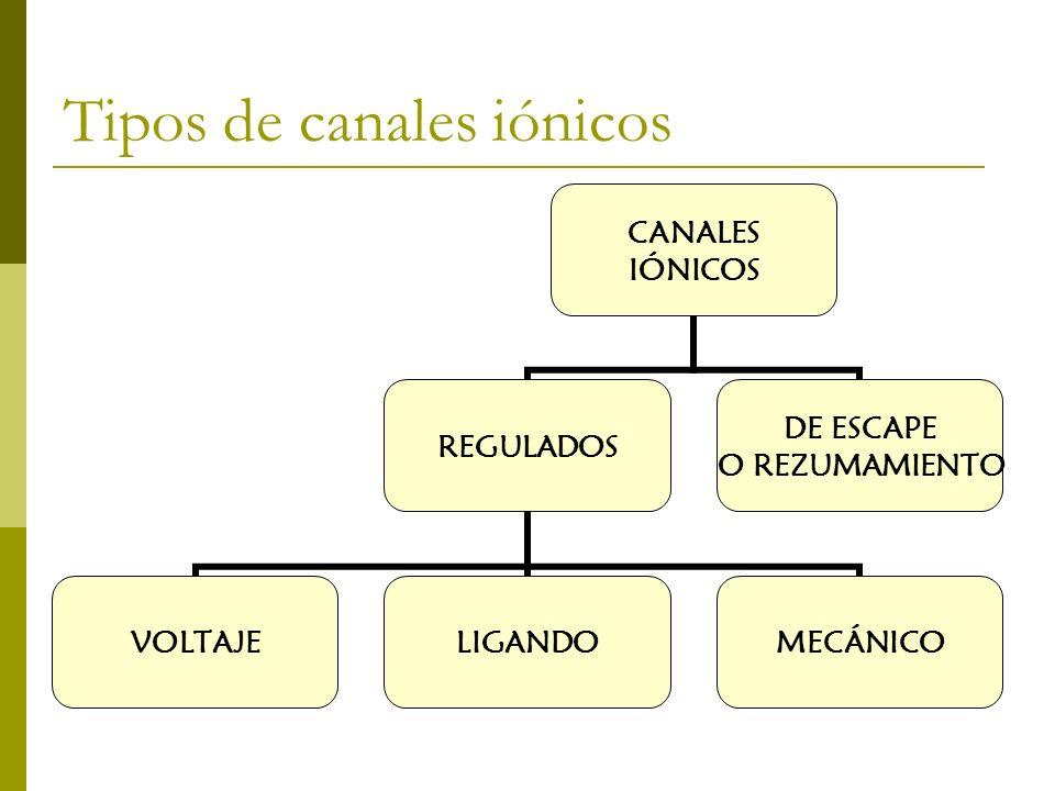 Tipos de canales iónicos CANALES IÓNICOS REGULADOS VOLTAJELIGANDOMECÁNICO DE ESCAPE O REZUMAMIENTO