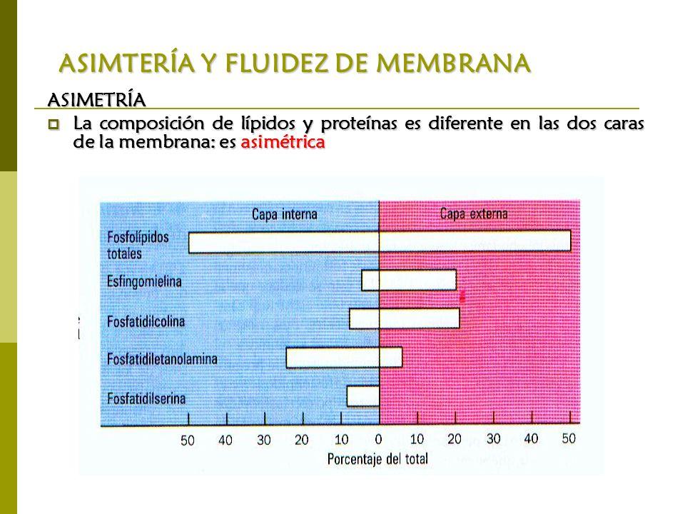 ASIMTERÍA Y FLUIDEZ DE MEMBRANA ASIMETRÍA La composición de lípidos y proteínas es diferente en las dos caras de la membrana: es asimétrica La composi