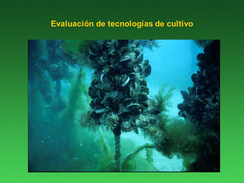 Evaluación de tecnologías de cultivo