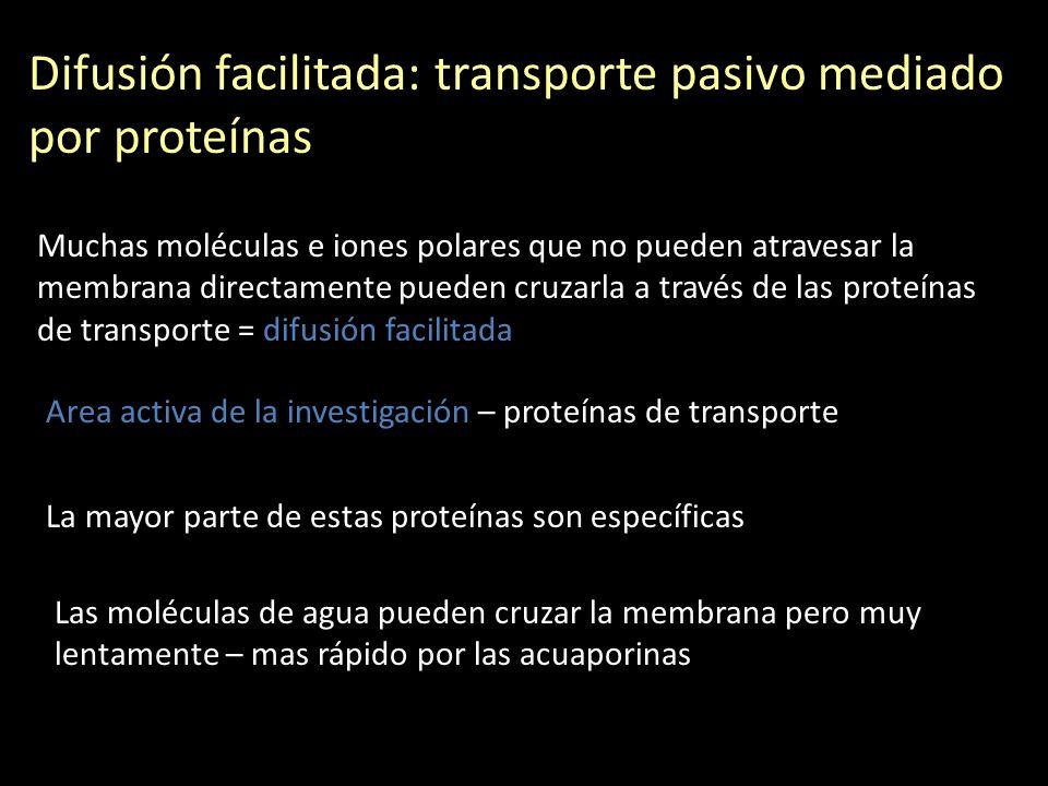 Difusión facilitada: transporte pasivo mediado por proteínas Muchas moléculas e iones polares que no pueden atravesar la membrana directamente pueden