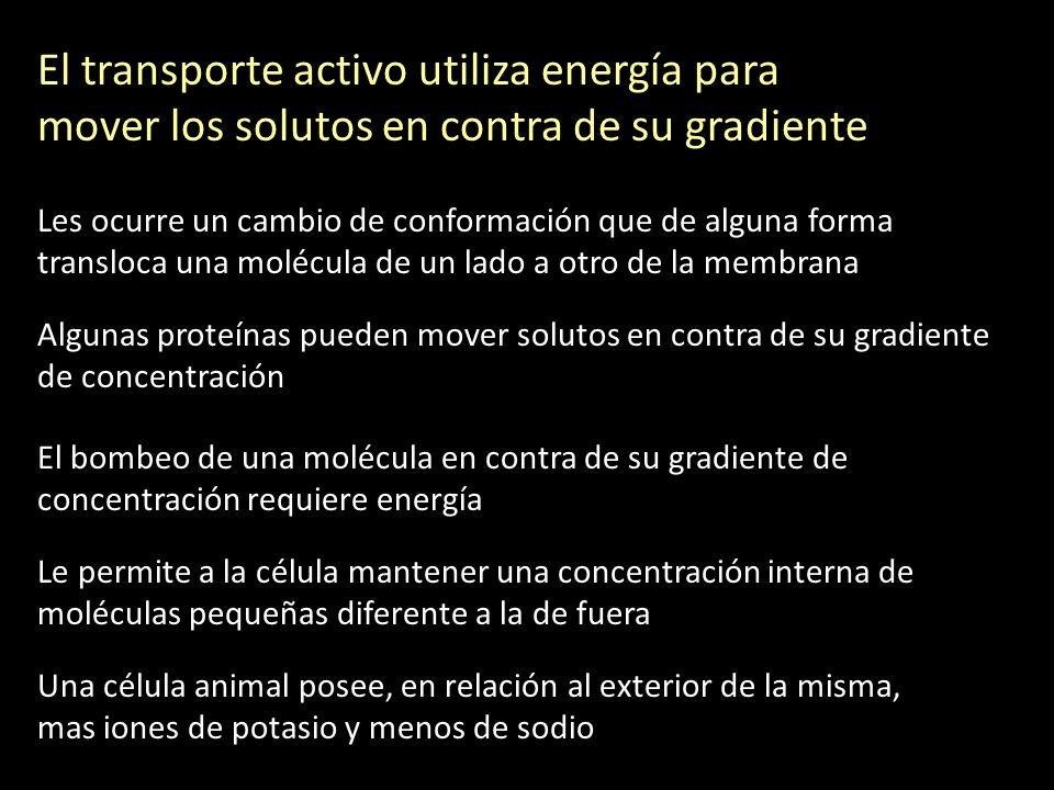 El transporte activo utiliza energía para mover los solutos en contra de su gradiente Les ocurre un cambio de conformación que de alguna forma translo