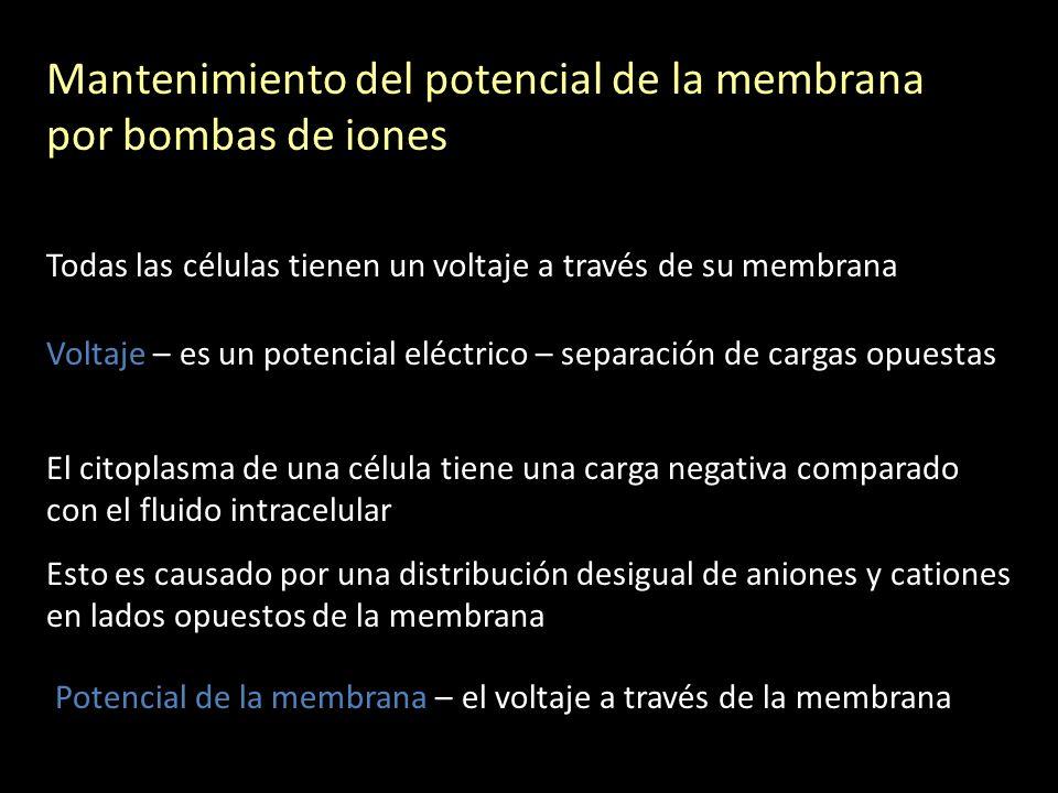 Mantenimiento del potencial de la membrana por bombas de iones Todas las células tienen un voltaje a través de su membrana Voltaje – es un potencial e