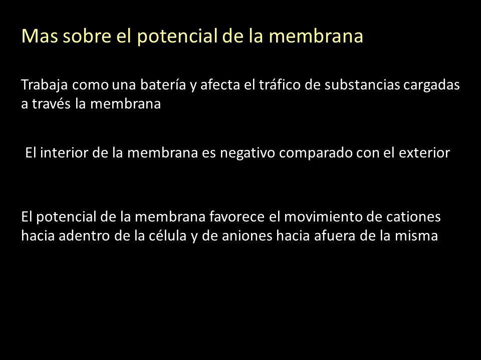 Mas sobre el potencial de la membrana Trabaja como una batería y afecta el tráfico de substancias cargadas a través la membrana El interior de la memb