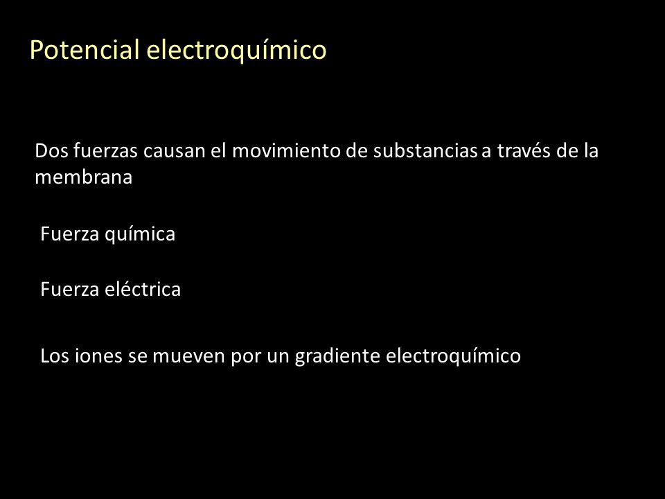 Dos fuerzas causan el movimiento de substancias a través de la membrana Potencial electroquímico Fuerza química Fuerza eléctrica Los iones se mueven p