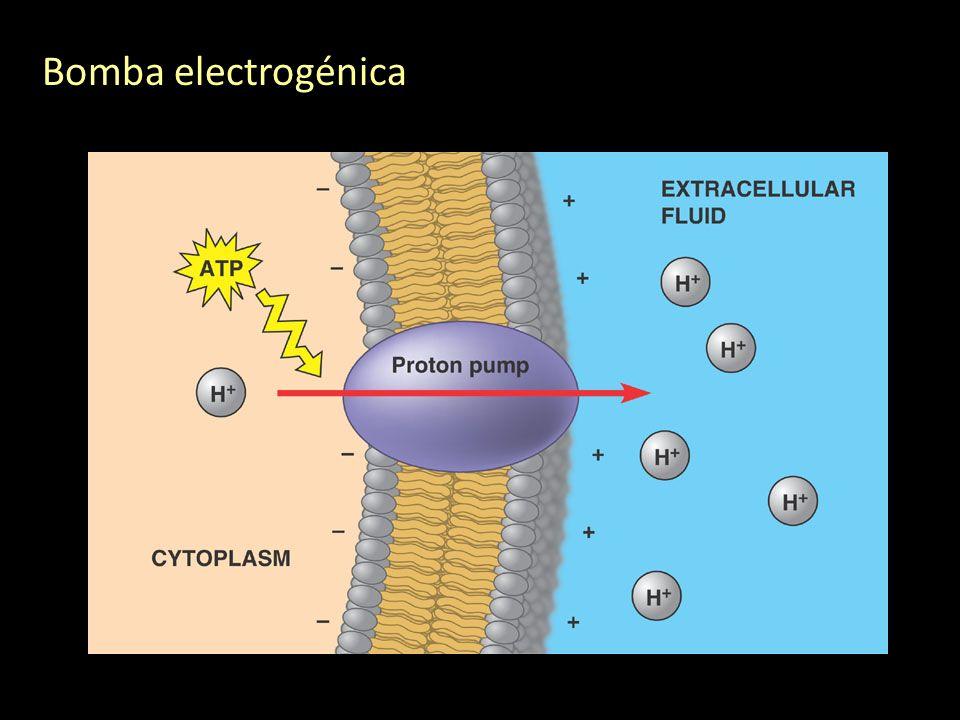 Bomba electrogénica
