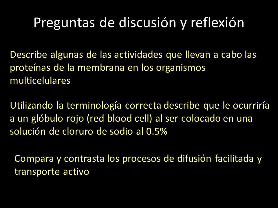Preguntas de discusión y reflexión Describe algunas de las actividades que llevan a cabo las proteínas de la membrana en los organismos multicelulares