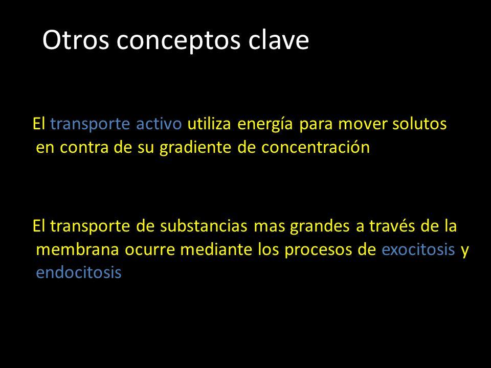 Otros conceptos clave El transporte activo utiliza energía para mover solutos en contra de su gradiente de concentración El transporte de substancias