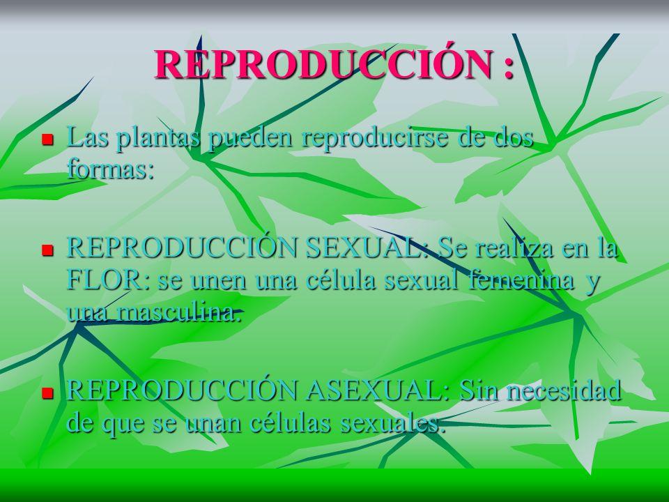 REPRODUCCIÓN : Las plantas pueden reproducirse de dos formas: Las plantas pueden reproducirse de dos formas: REPRODUCCIÓN SEXUAL: Se realiza en la FLOR: se unen una célula sexual femenina y una masculina.