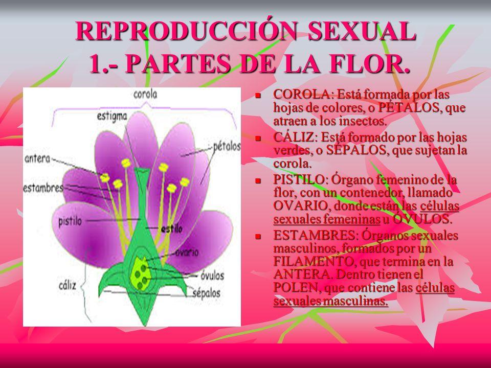 REPRODUCCIÓN SEXUAL 1.- PARTES DE LA FLOR.