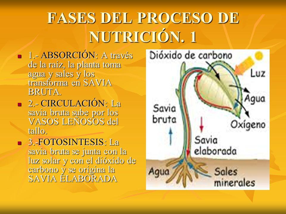 FASES DEL PROCESO DE NUTRICIÓN.