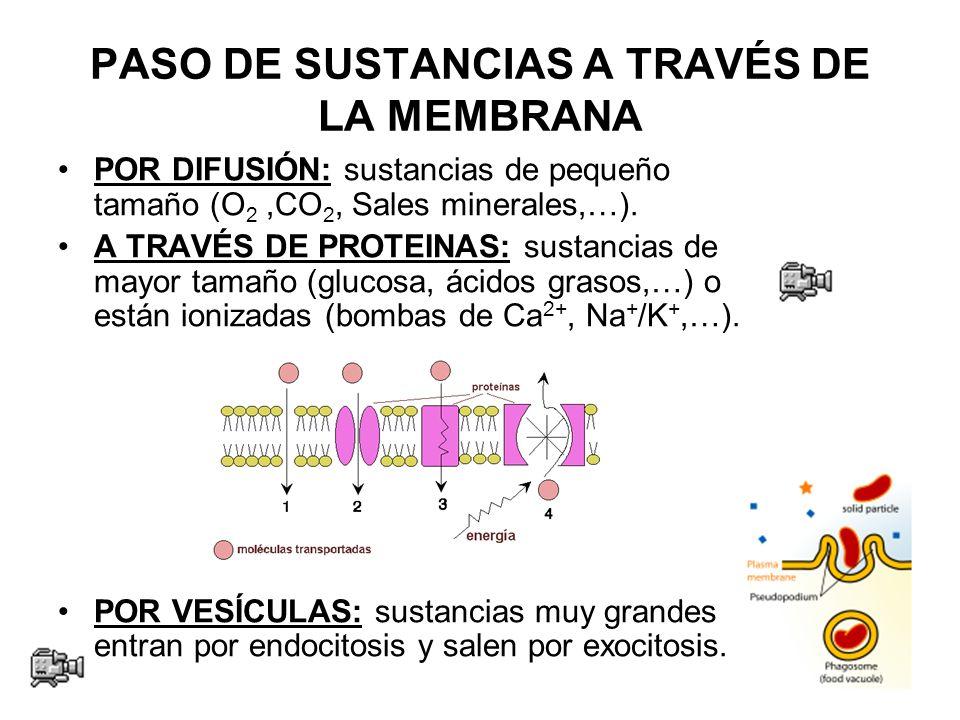 PASO DE SUSTANCIAS A TRAVÉS DE LA MEMBRANA POR DIFUSIÓN: sustancias de pequeño tamaño (O 2,CO 2, Sales minerales,…).