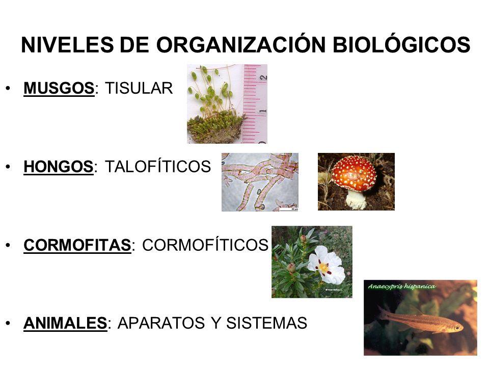 NIVELES DE ORGANIZACIÓN BIOLÓGICOS MUSGOS: TISULAR HONGOS: TALOFÍTICOS CORMOFITAS: CORMOFÍTICOS ANIMALES: APARATOS Y SISTEMAS