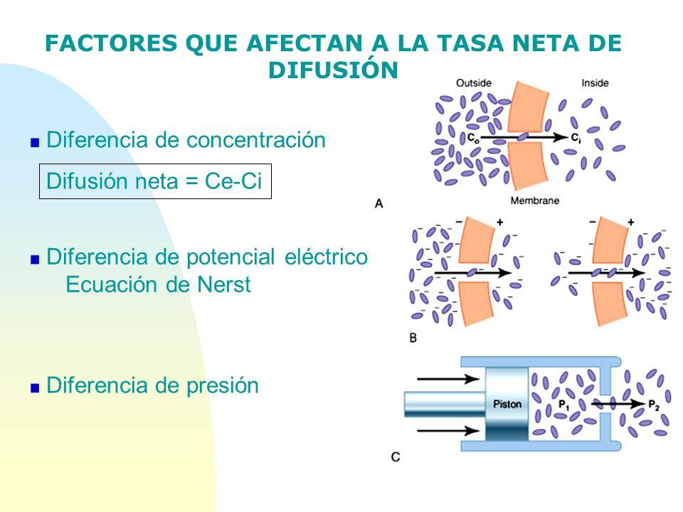 FACTORES QUE AFECTAN A LA TASA NETA DE DIFUSIÓN Diferencia de presión Diferencia de potencial eléctrico Ecuación de Nerst Diferencia de concentración