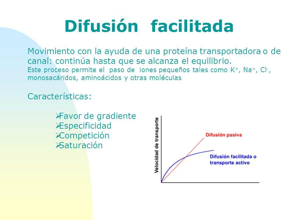 Movimiento con la ayuda de una proteína transportadora o de canal: continúa hasta que se alcanza el equilibrio. Este proceso permite el paso de iones