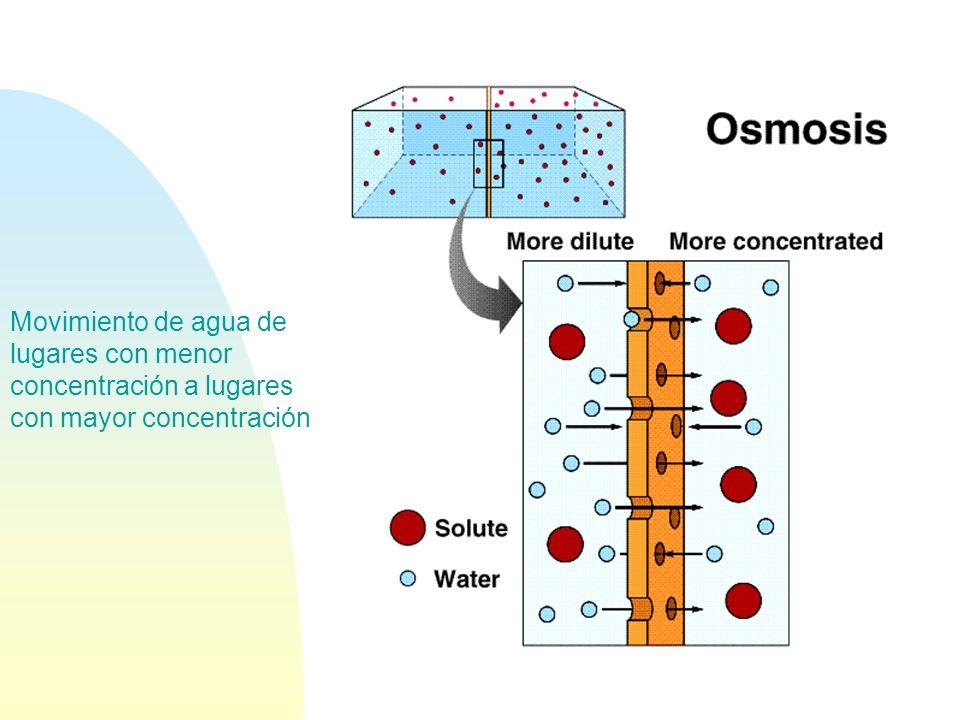 Movimiento de agua de lugares con menor concentración a lugares con mayor concentración
