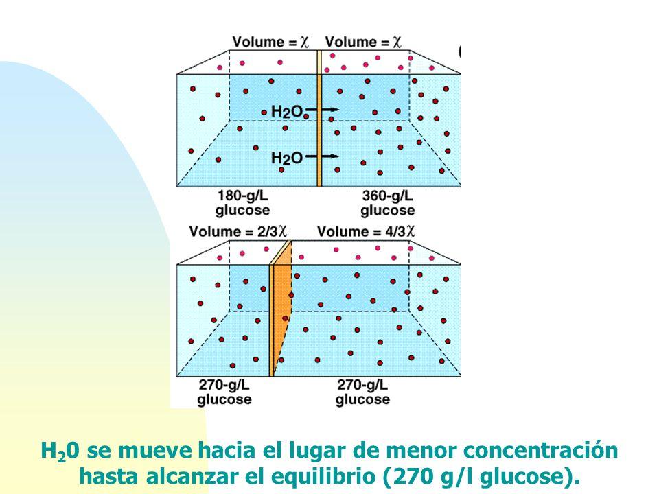 H 2 0 se mueve hacia el lugar de menor concentración hasta alcanzar el equilibrio (270 g/l glucose).