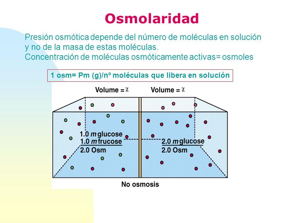 Presión osmótica depende del número de moléculas en solución y no de la masa de estas moléculas. Concentración de moléculas osmóticamente activas= osm