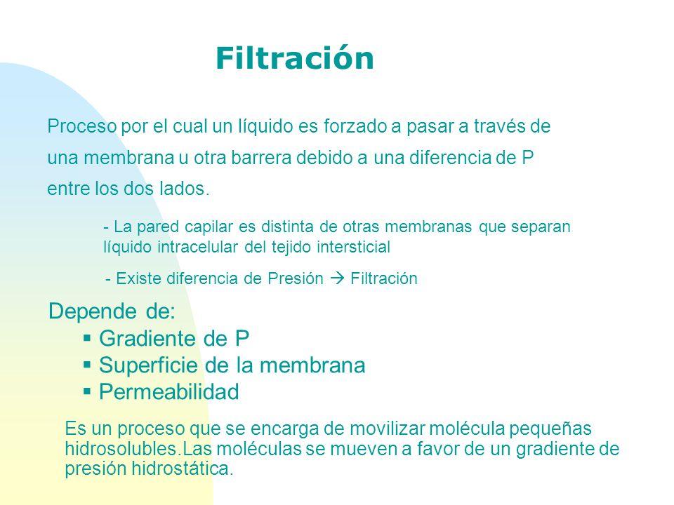 Filtración - La pared capilar es distinta de otras membranas que separan líquido intracelular del tejido intersticial - Existe diferencia de Presión F