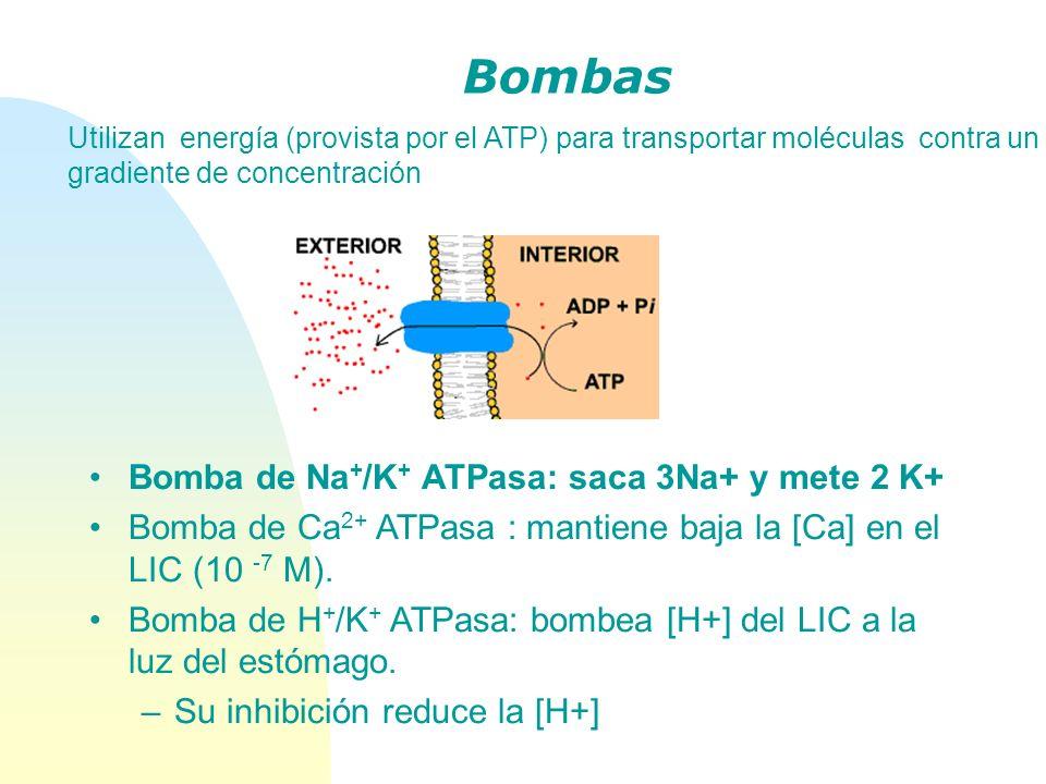 Bombas Utilizan energía (provista por el ATP) para transportar moléculas contra un gradiente de concentración Bomba de Na + /K + ATPasa: saca 3Na+ y m