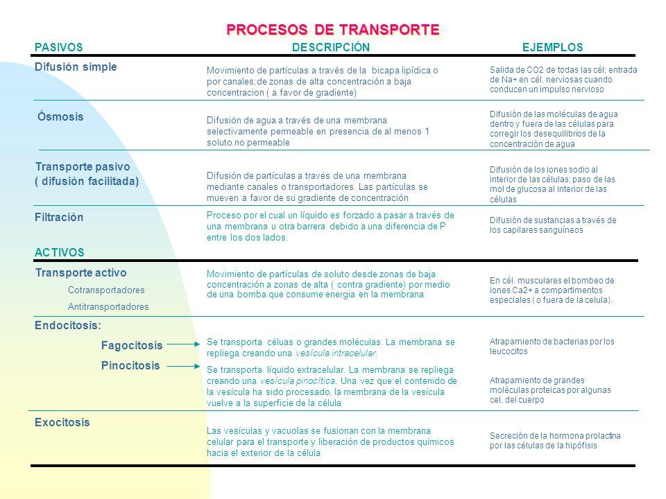 PASIVOS DESCRIPCIÓN EJEMPLOS Difusión simple Ósmosis Transporte pasivo ( difusión facilitada) Filtración ACTIVOS Transporte activo Cotransportadores A
