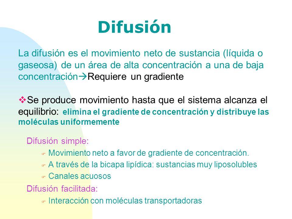 Difusión Difusión simple: F Movimiento neto a favor de gradiente de concentración. F A través de la bicapa lipídica: sustancias muy liposolubles F Can