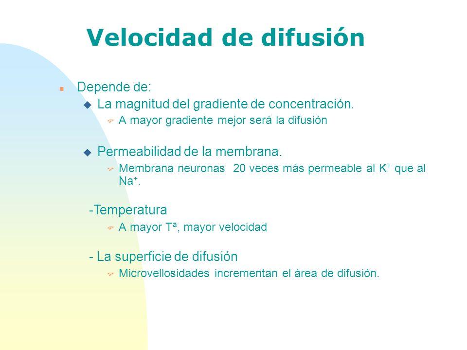 Velocidad de difusión n Depende de: u La magnitud del gradiente de concentración. F A mayor gradiente mejor será la difusión u Permeabilidad de la mem