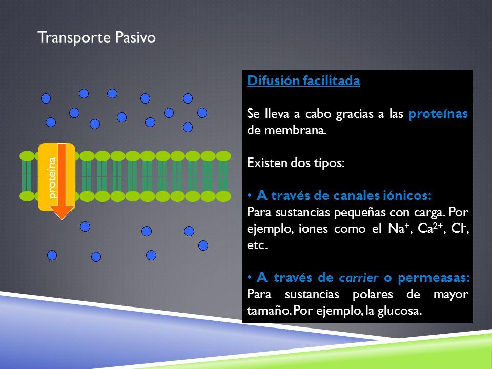 proteína Difusión facilitada Se lleva a cabo gracias a las proteínas de membrana. Existen dos tipos: A través de canales iónicos: Para sustancias pequ