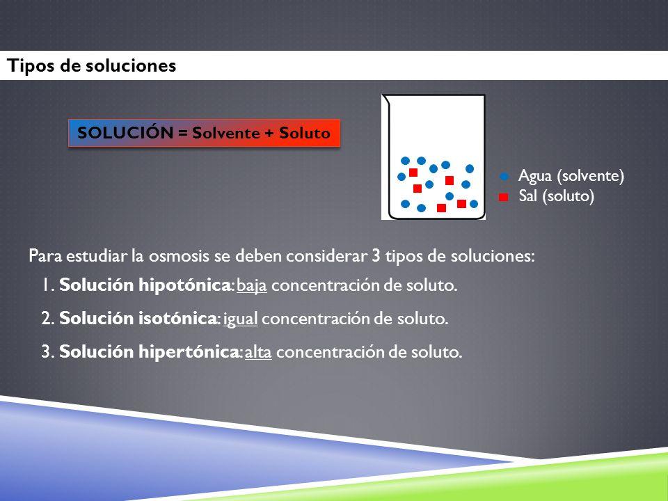 Tipos de soluciones Agua (solvente) Sal (soluto) SOLUCIÓN = Solvente + Soluto Para estudiar la osmosis se deben considerar 3 tipos de soluciones: 1. S
