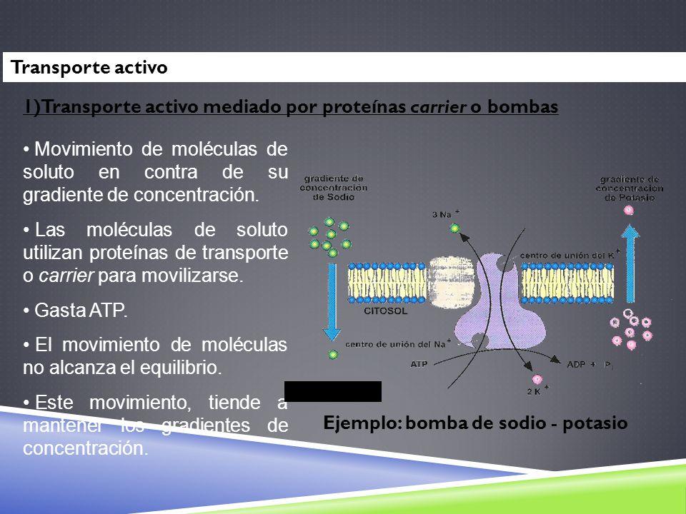 Movimiento de moléculas de soluto en contra de su gradiente de concentración. Las moléculas de soluto utilizan proteínas de transporte o carrier para